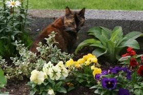 Betty in flower