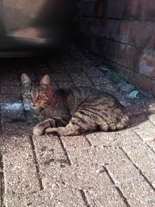 dexter-cat
