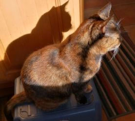 two cat shadow