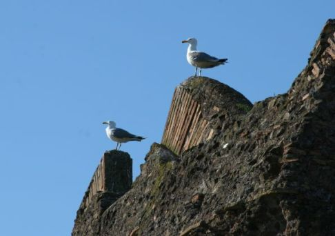 two seagulls s