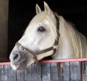 horse 1s
